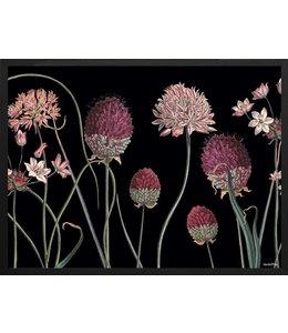 Poster Allium | 30x40