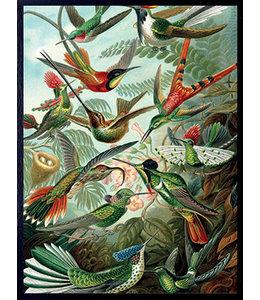 Poster RETRO BIRDS | 30x40cm