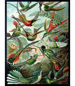 Vanilla Fly Poster RETRO BIRDS | 30x40cm