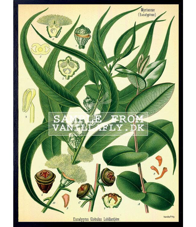 Vanilla Fly Print  LEAF 30 x 40 cm