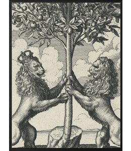 Poster Lions   20x 25cm