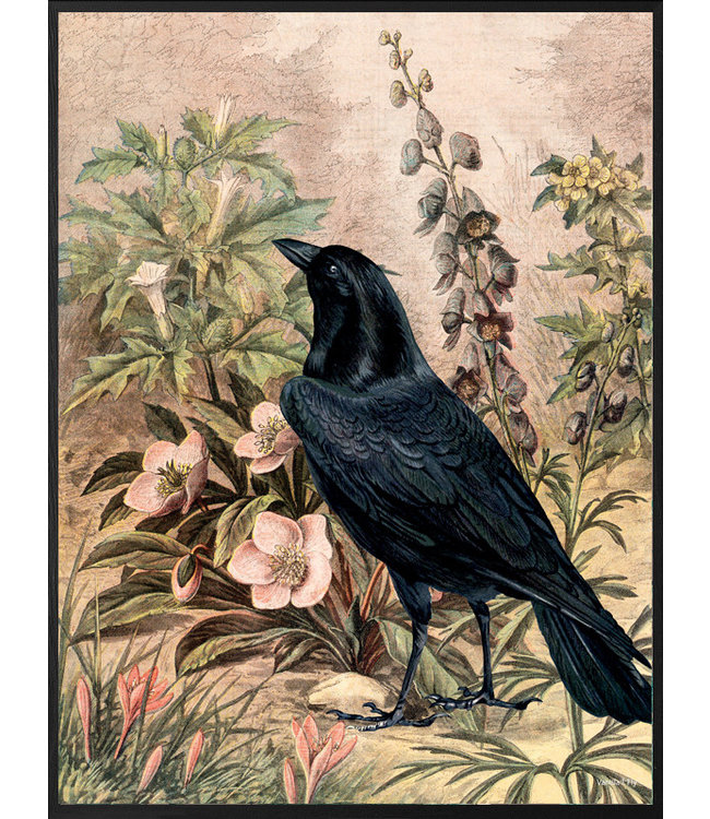 Vanilla Fly Vintage Poster Raven with Flowers | 20x 25cm