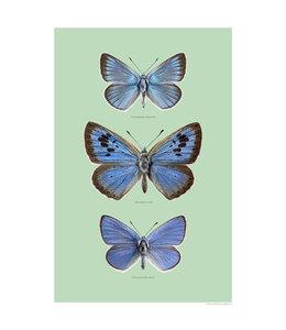 Liljebergs Blue wings, blauwe vlinders print A4