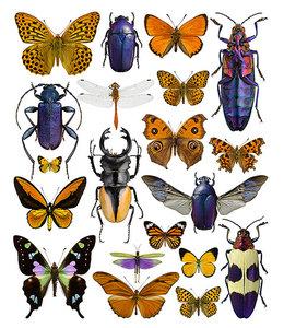 Foto Print Insecten | 30x40 cm | Paars/oranje