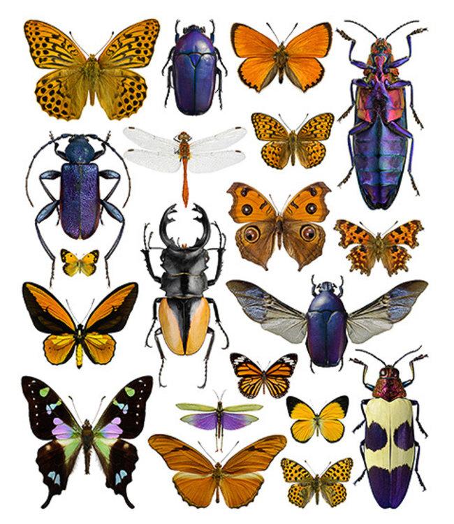 Liljebergs Macrofoto Poster Vlinders en kevers Paars & Oranje