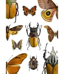Liljebergs Macrofoto poster Maroon bugs | 30x40 cm