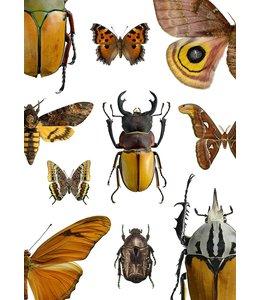 Macro Photo Poster Maroon bugs   30x40 cm