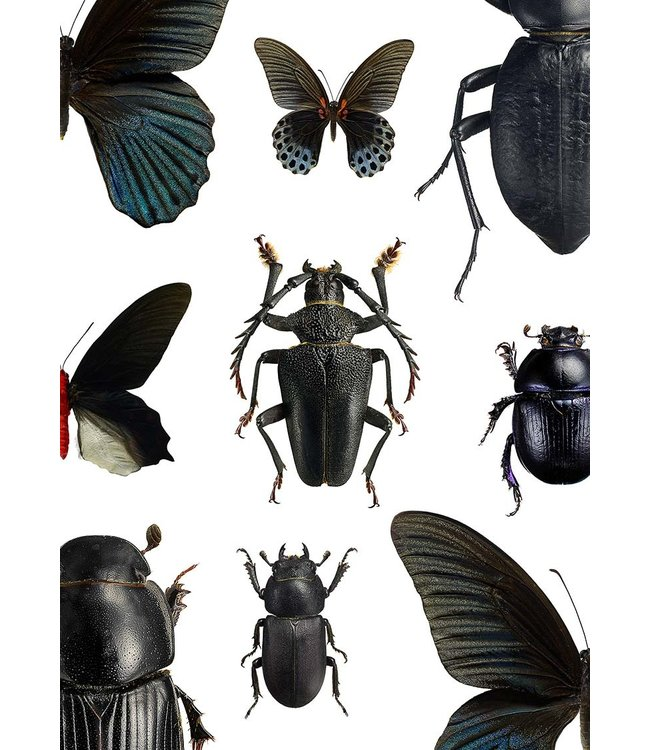 Liljebergs Collage Poster Black Bugs and butterflies in black