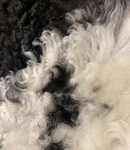 Lambskin Tibetan   mottled