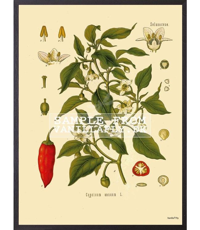 Vanilla Fly Retro Poster Chili | 30x40cm
