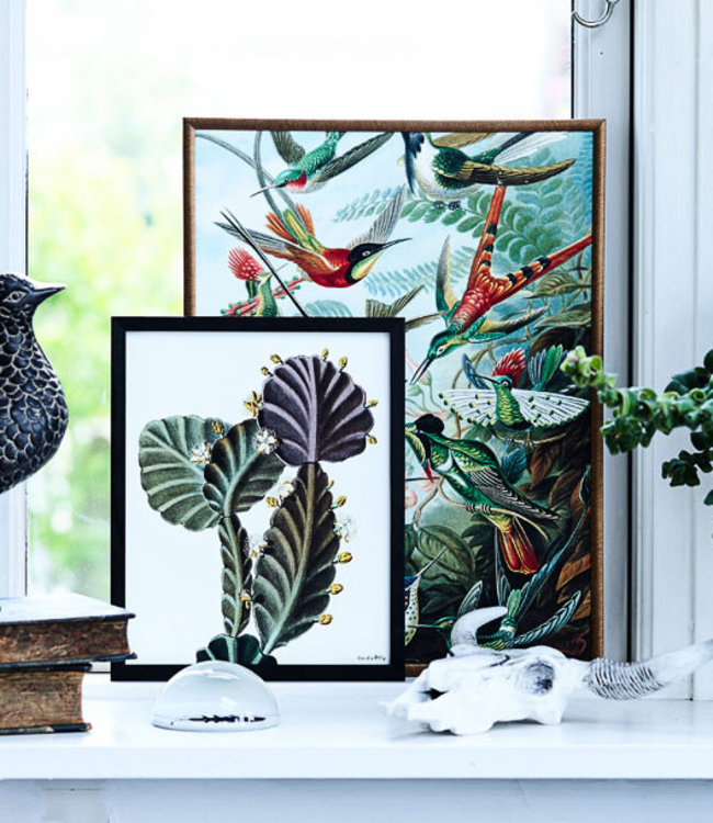 Vanilla Fly Print Plant Succulent