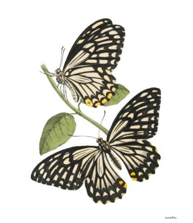 Vanilla Fly Retro print   Vlinders