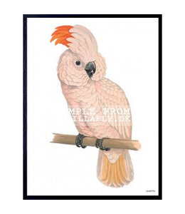 Vanilla Fly Poster in lijst | PINK PARROT
