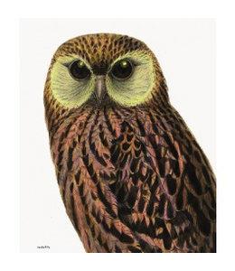 Vanilla Fly Poster | GREEN EYED OWL | 30x40 cm