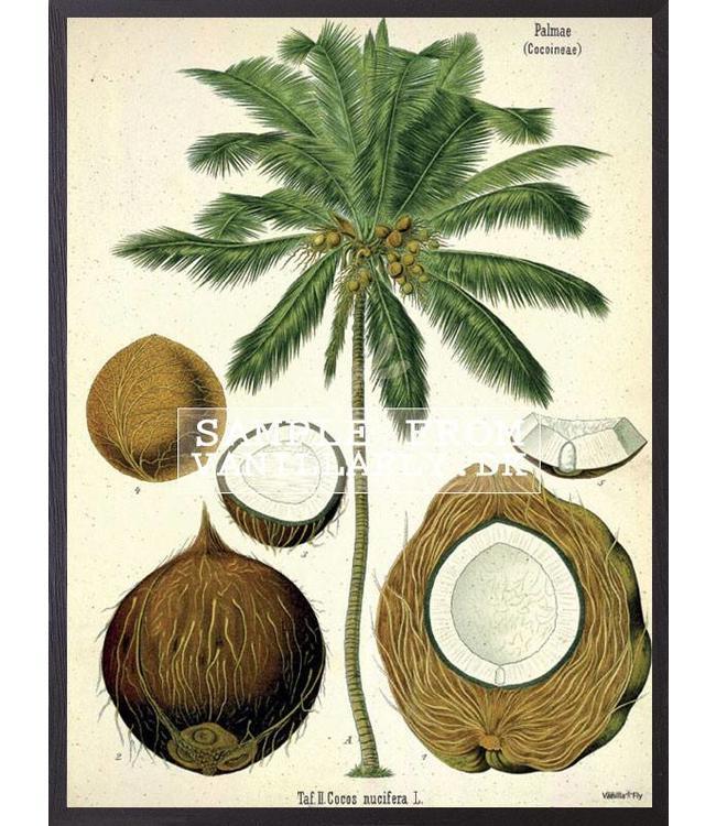 Retro Print Coconut | Kokosnoot palmboom
