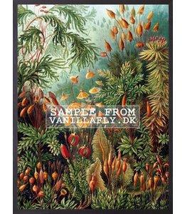 Poster | RETRO NATURE | 30x40 cm
