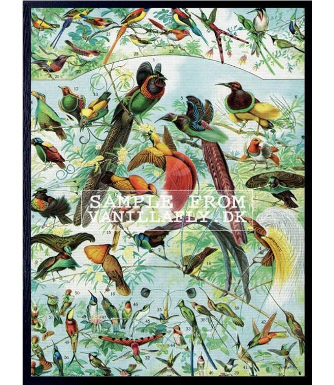Vanilla Fly Print | BIRD PARTY | 30x40 cm