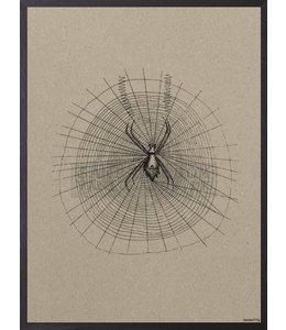 Vanilla Fly Poster SPIDER CARDBOARD | 20x25