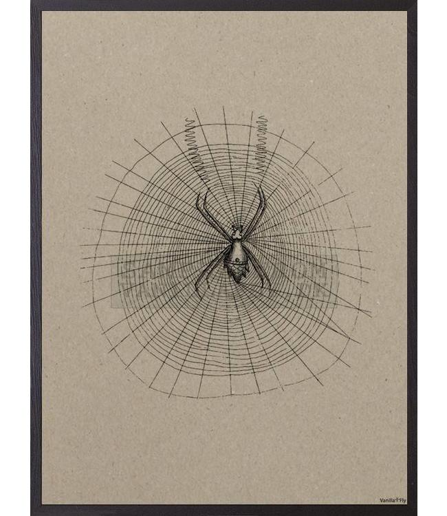 Vanilla Fly Print  SPIDER CARDBOARD | 20x25