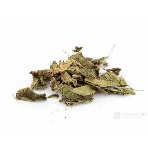 Maulbeerblätter ( Mulberry leaves ) 10 Stück