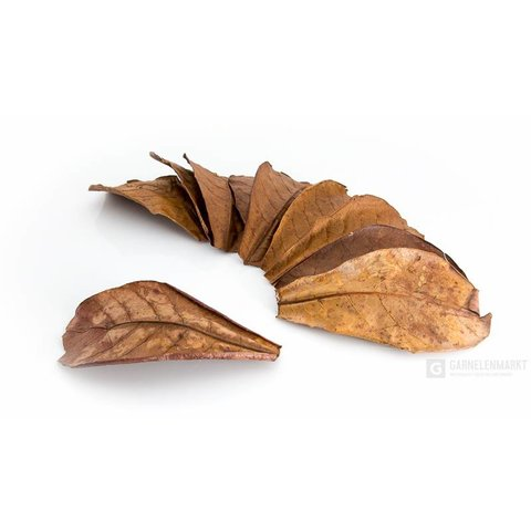 Seemandelbaumblätter NANO