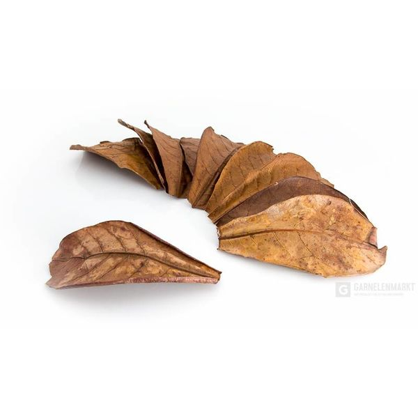 GM-Natur Seemandelbaumblätter NANO