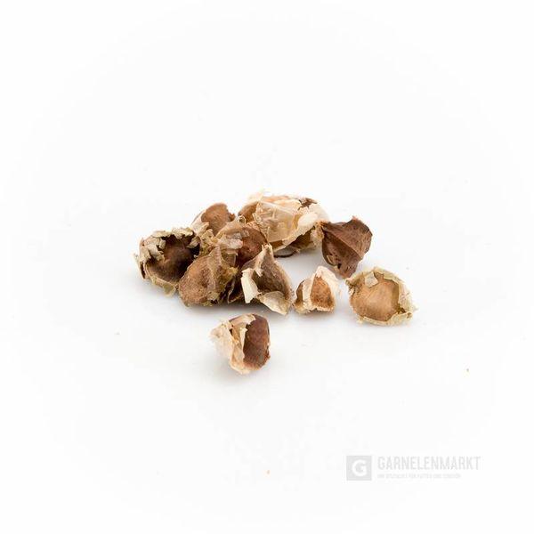 GM-Natur Moringa Samen