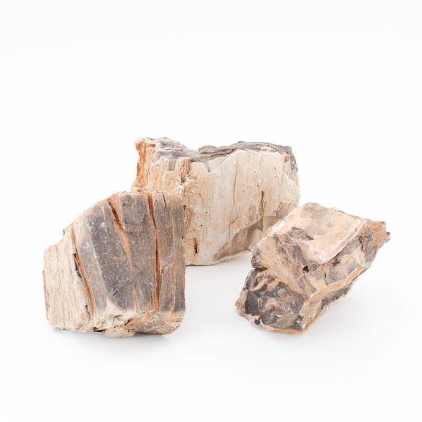 Versteinertes Holz, 0.8-1.2kg