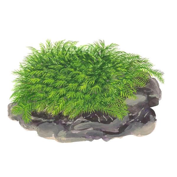 Tropica Fissidens fontanus - Portion