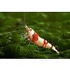 Red Bee Ellen Wang