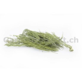 GM-Natur Fenchellaub / -kraut (grün, getrocknet)