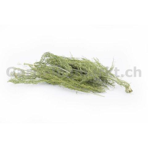 Fenchellaub / -kraut (grün, getrocknet)
