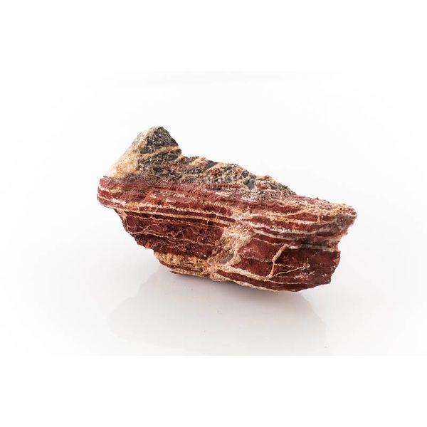 Fiery Red Rock - Streifenburgunder 0.8-1.2kg