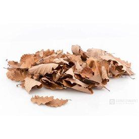 Garnelenmarkt Eichenblätter braun getrocknet