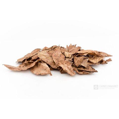 Walnussblätter braun getrocknet