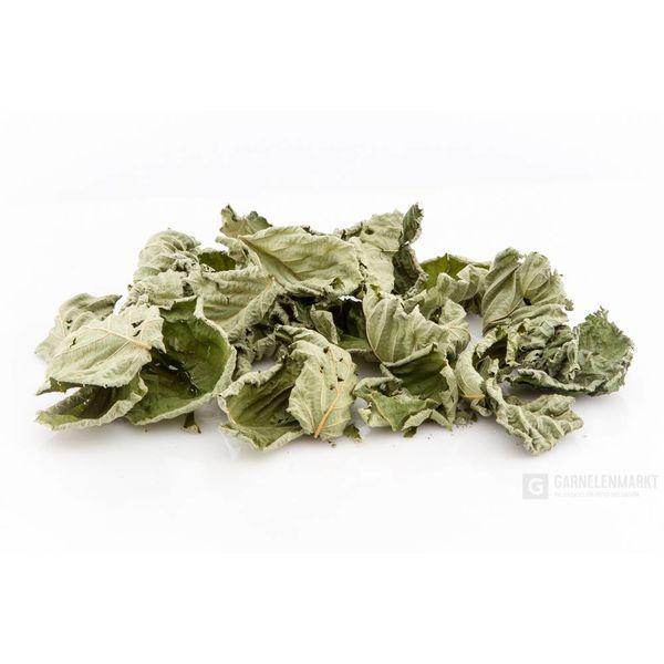 GM-Natur Haselnussblätter, grün getrocknet