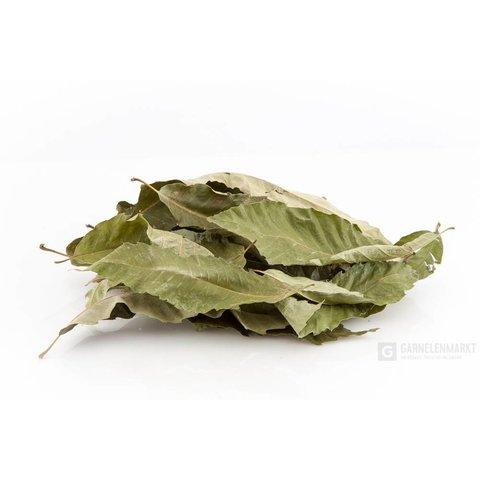 Edelkastanien / Marroniblätter, grün getrocknet