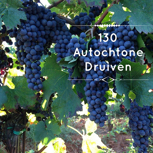 130 autochtone druiven