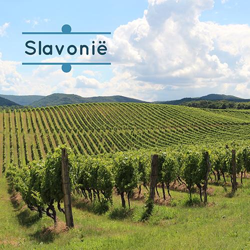 Wijnweetjes Slavonie