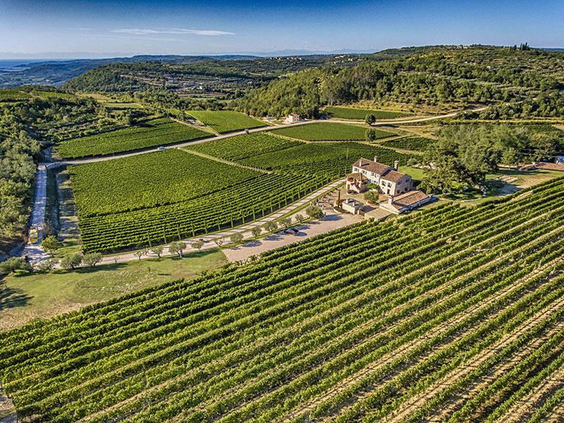 Wine region Istria