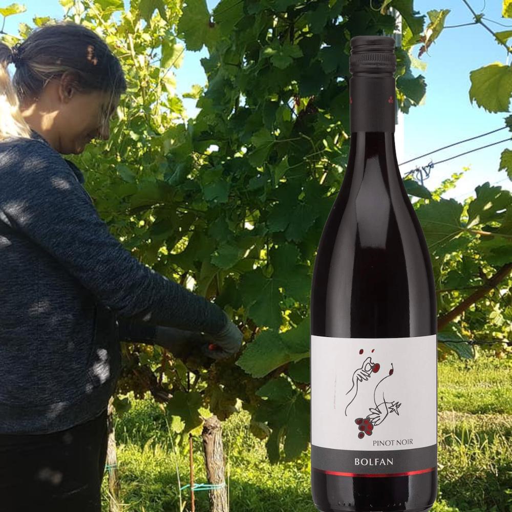 Bolfan Pinot Noir