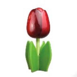 Rote Holz Tulpe auf einem Blatt