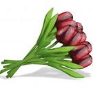 boeket houten tulpen rood