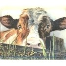 Tablett mit Kuh