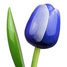 houten tulpen in de kleur blauw 34cm