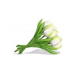 Bouquet weiße Holz Tulpen