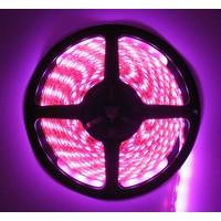 LEDStrip Roze 2,5 Meter 60 LED per meter 12 Volt