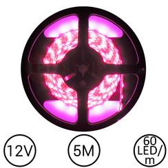 LEDStrip Roze 5 Meter 60 LED 12 Volt