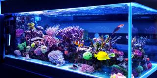 Ledstrips voor het aquarium
