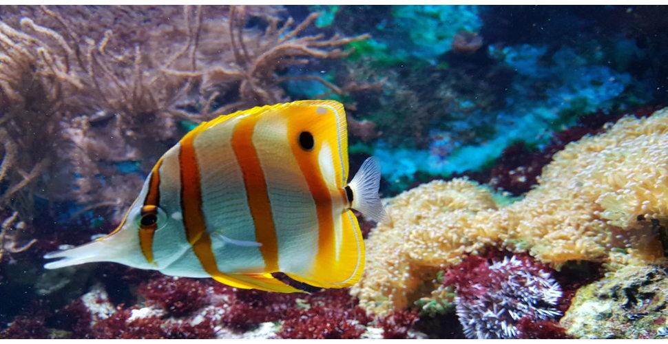 LEDStrips in een aquarium plaatsen